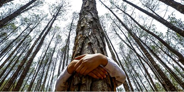 e0773b35a6365 Kadın edebiyatında ve feminizmde orman, ağaç, bitki imgelem ve ...