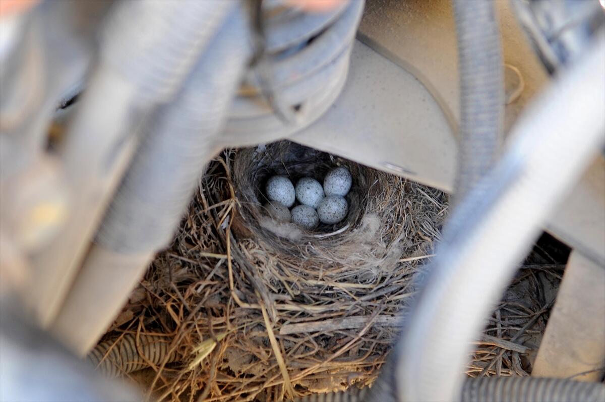 """Kuş ve yuvadaki yumurtaların zarar görmemesi için kimseyi kamyona yaklaştırmadığını anlatan Varol, """"Yaklaşık 20 gün önce kamyon çalışırken etrafında bir kuş dolaşıyordu. Kamyon nereye giderse kuş onu takip etmeye başladı. Biz de merak ettik, kamyonu atölyeye çektik baktık, kuş yuvası gördük. Motor şasesinin içine kuş yuva yapmış ve 6 yumurta içinde var. Şefimizin talimatıyla kamyonu çalıştırmamaya karar verdik. Bu kuş yavru yapana, uçup gidene kadar kamyonu çalıştırmayacağız"""" dedi."""