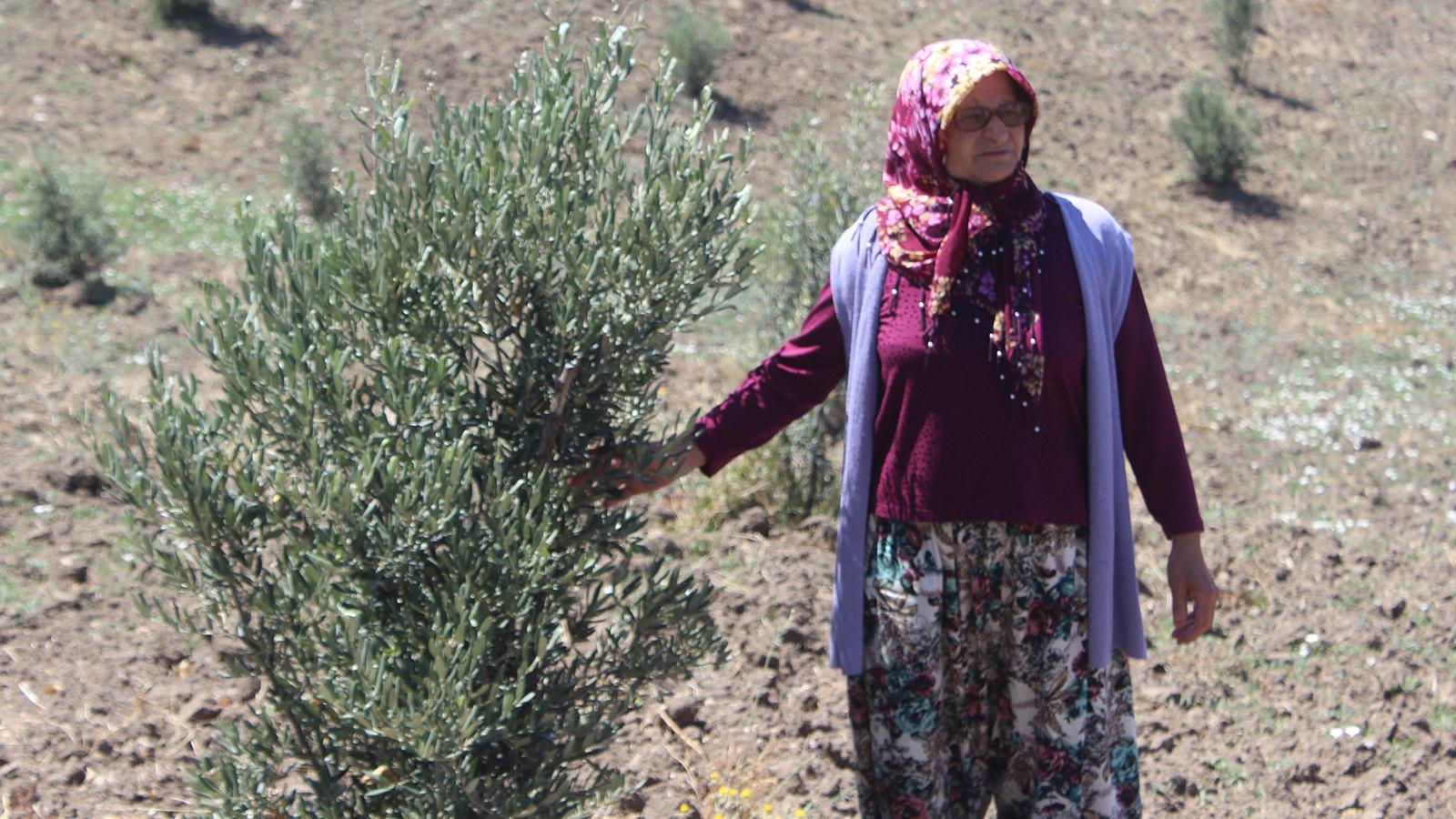 Köylerindeki boş alanları ağaçlandıran köylüler tek tek hapse giriyor