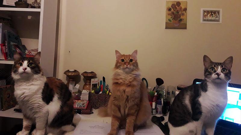 Kediler Günü'nde evinde kedi besleyen kişilerin kedi bakımıyla ilgili dikkat etmeleri gereken bazı noktaları hatırlatmak istedik. İşte kediler hakkında bilinmesi gereken 5 bilgi.