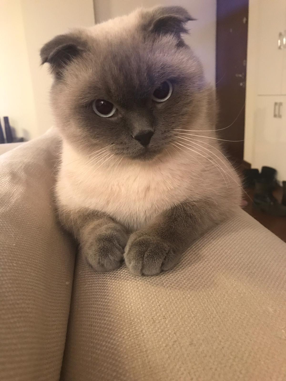 Kedinizin zehirlendiğini fark ettiğiniz anda hemen kahve ile tütünü karıştırıp su ile ıslatarak kedinizin boğazına sürebilirsiniz. Kedinize yapacağınız ilk müdahaleden sonra hemen veterinere gitmelisiniz.