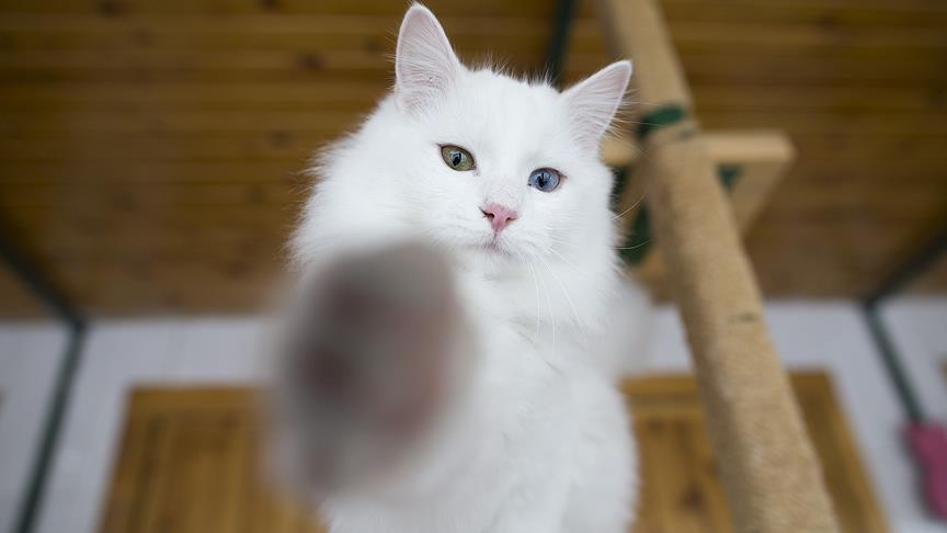 Türkiye'nin yüzde 19'u kedi sahibi