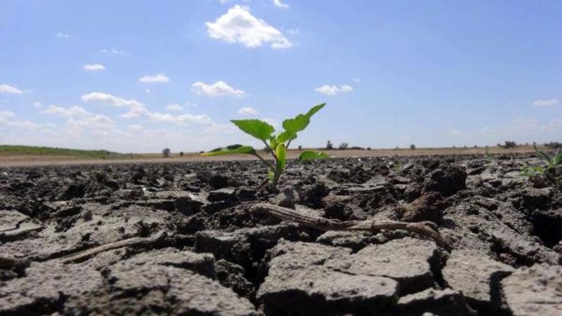 tarım kuraklık